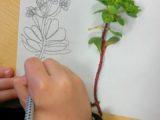 A scuola di fiori