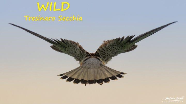 WILD Tresinaro Secchia: conoscere per proteggere
