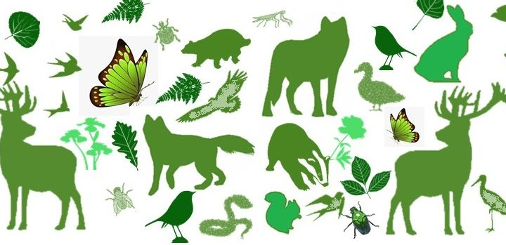 22 maggio 2020 – Giornata mondiale della Biodiversità