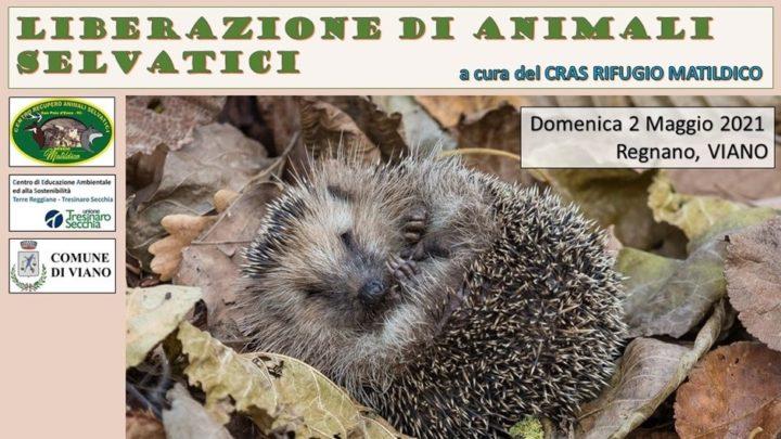 Liberazione di animali selvatici a Regnano (Viano)