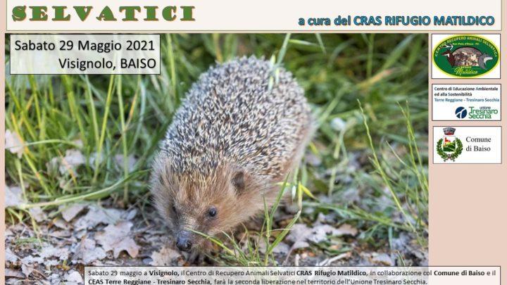 Liberazione di animali selvatici a Visignolo (Baiso)