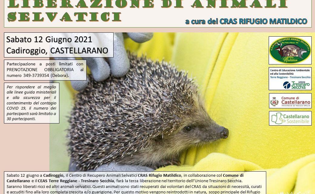 Liberazione di animali selvatici  a Cadiroggio (Castellarano)